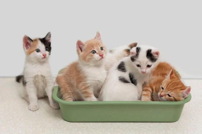 7 Tips For Controlling A Stinky Litter Box Cattime