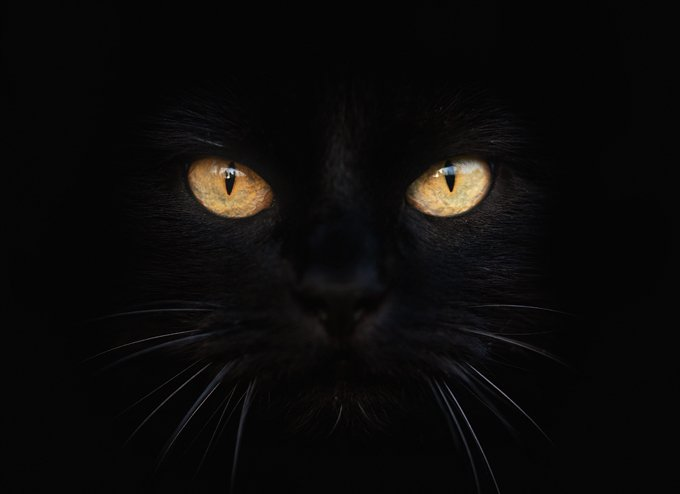 Protect Black Cats This Halloween - CatTime