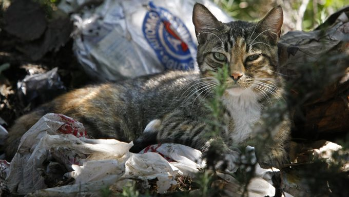 stray cat outside among trash