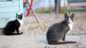 Is Having A Feral Cat For Your Yard A New Trend?