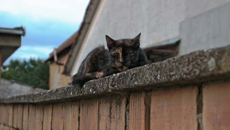 A tortoiseshell cat lying on a wall