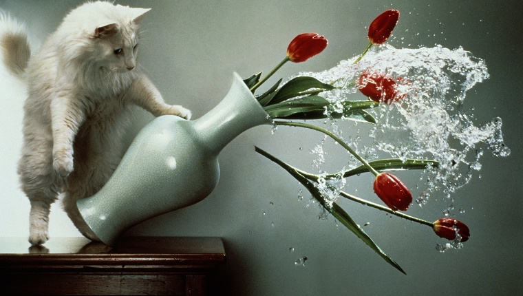 CAT KNOCKING OVER VASE
