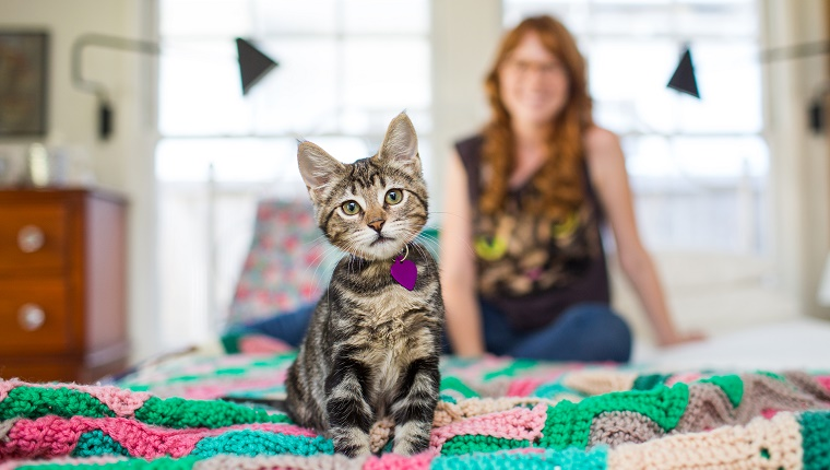 A kitten sits on a bed with a young woman visible in the background.
