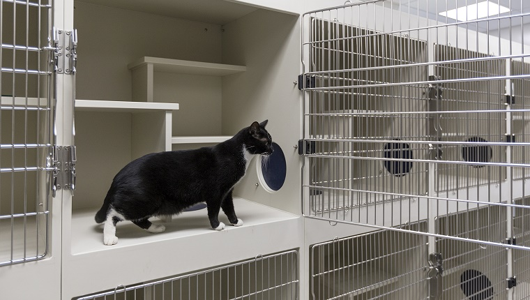 Cat sitting in open cage in animal shelter