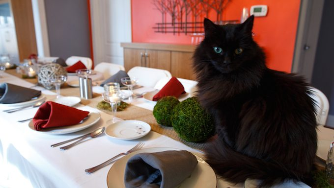 A black cat sit on top of a holiday dinner table.