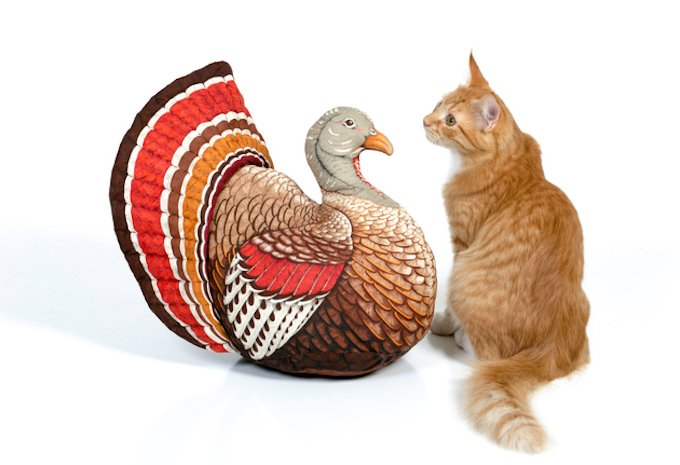Kitten sitting with a vintage Thanksgiving turkey pillow on 255 white.