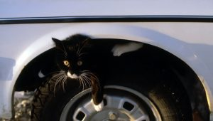 6 Of The Most Preventable Cat Accidents–And How To Avoid Them