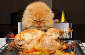 25 Cats Celebrating Thanksgiving [PICTURE GALLERY]