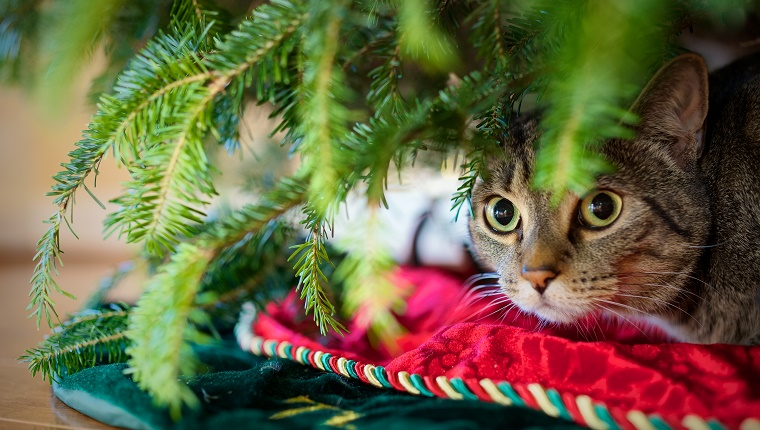 Cat hiding out under the Christmas tree.
