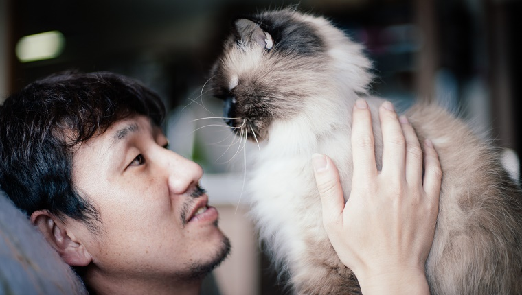 Japanese man holding his pet Himalayan cat