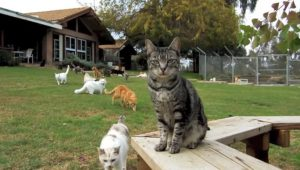 10 Amazing Cat Rescue Groups To Donate To Before The End Of The Year