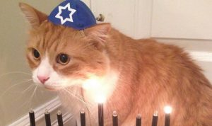 Chag Sameach! 30 Adorable Hanukkah Cats [PICTURE GALLERY]
