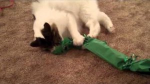 10 Excited Cats Open Christmas Presents [VIDEO]