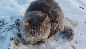 Couple Saves Cat With All Four Paws Frozen To The Ground [VIDEO]