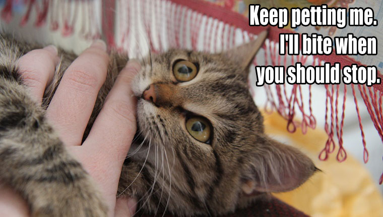 things-your-cat-wants-to-say-3