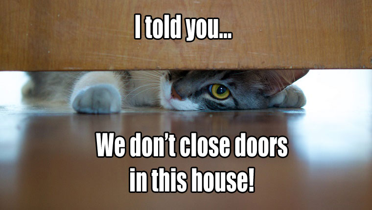 things-your-cat-wants-to-say-8