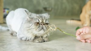5 Plants Your Cat Might Like Just As Much As Catnip