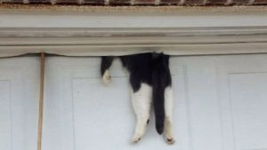 Louisiana Cat Trapped In Garage Door Is Unharmed