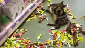 Runaway Cat Wanders Into Pet Store & Goes Crazy In Catnip Aisle [VIDEO]