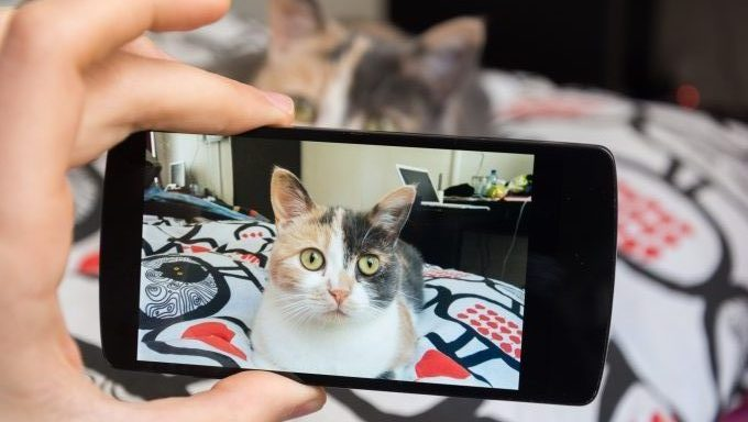 phone taking pictures of cat