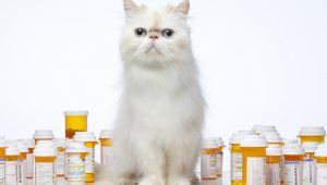 10 Things Cat Owners Need To Throw Out Right Now