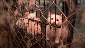 USDA Removes Database Of Animal Welfare Violators Including Kitten And Puppy Mills