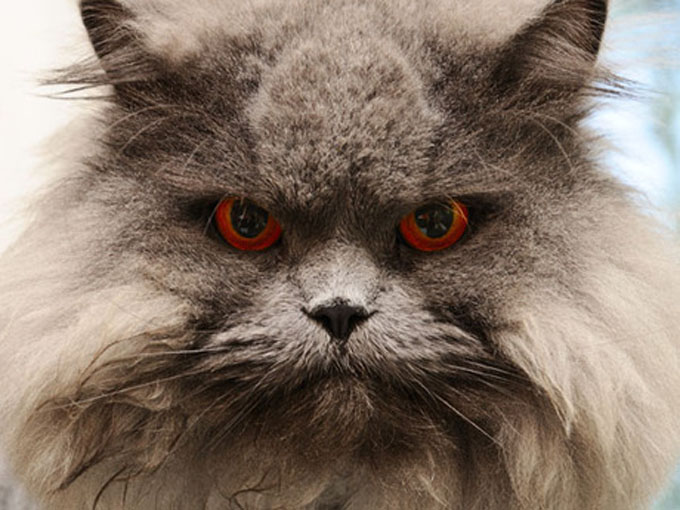 You're not imagining things. Your cat IS judging you. (Photo Credit: Shutterstock)