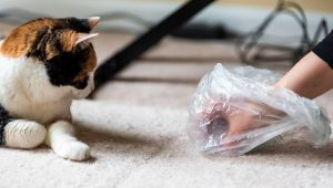 Hip Dysplasia: A Surprising Cause of Litter Box Aversion In Cats