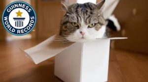The Most Watched Animal On YouTube Is Maru The Cat