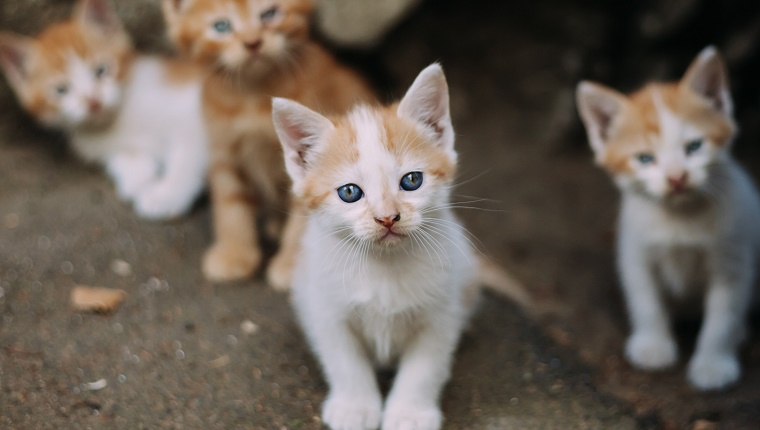 Group of cute homeless kittens looking at camera