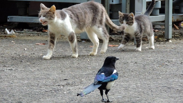 animal, stray cat, cat, cute, wildlife, magpie, kitten, cat, coexistence, harmony, bird, urban, aspalt, road, nature