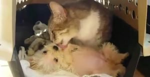 Cat Attacked By A Pack Of Dogs Falls In Love With A Stray Puppy [VIDEO]
