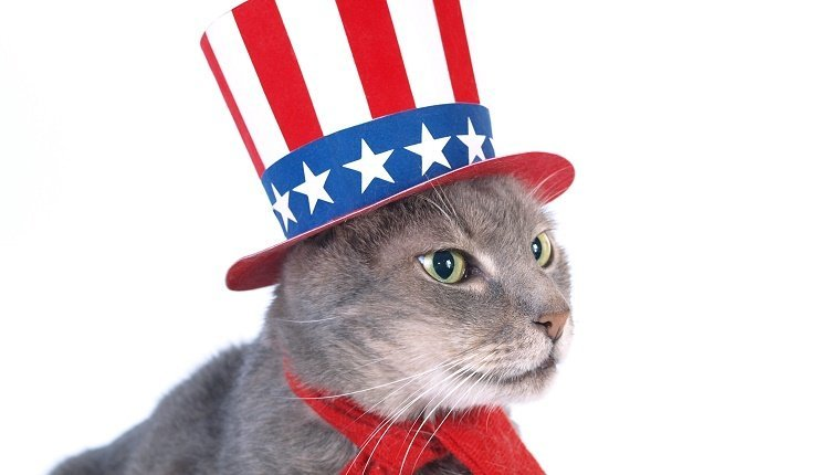 The cat with a uncle Sam costume