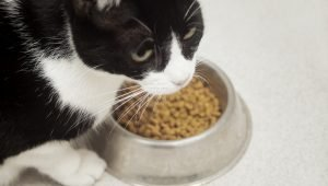 6 Things Cats Love More Than Food