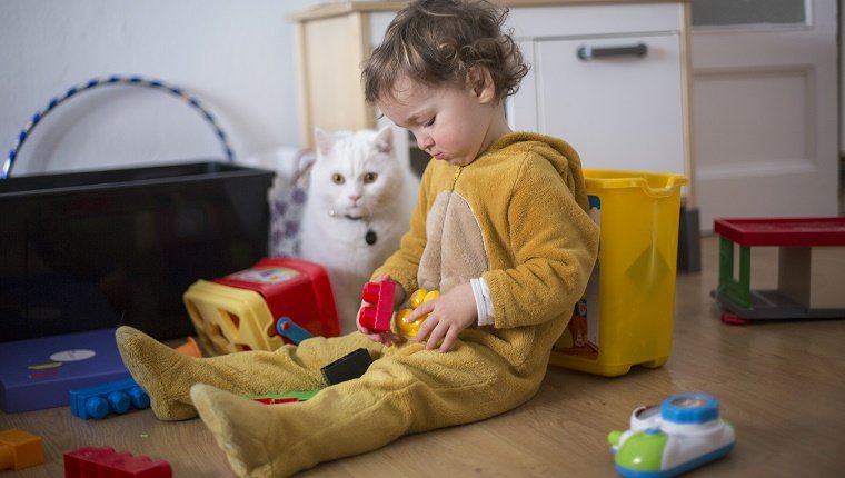 """playing with blocks and the cat""""n"""