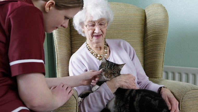 care worker chatting to her elderly pacient and strocking her cat