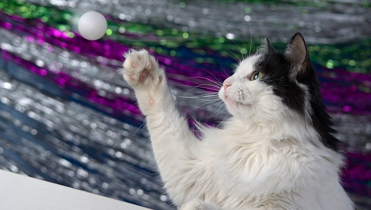Cat playing with a ball.