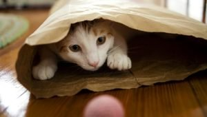8 Household Objects That Make Safe Instant Cat Toys–And Some You Should Avoid