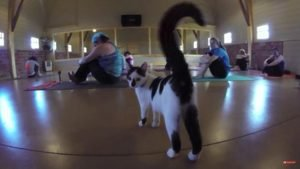 Yoga For Adoptable Shelter Cats