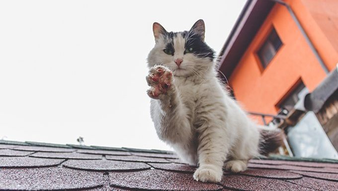 cat on roof holding up paw