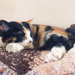 Why Are Calico Cats Almost Always Female?