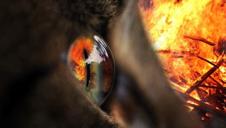 The fire in the eye. In an eye of a cat is reflected a fire