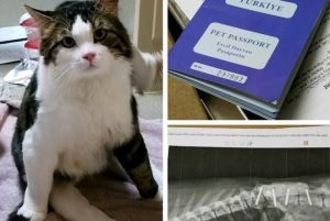 Special Needs Cat Of The Week: Anka