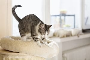 Why Do Cats Knead? 5 Reasons Your Cat Kneads You