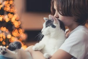 7 Reasons Your Cat Thinks Christmas Is 100% About Them