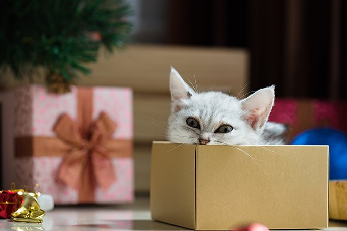 dont make the kitten a surprise gift - What Is A Good Christmas Present