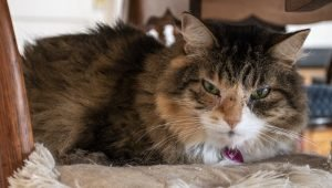 Senior Cats: Proper Care And What To Expect
