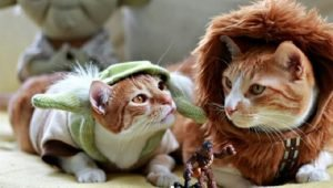 30 Cats Ready To See The Next Star Wars Movie [PICTURES]