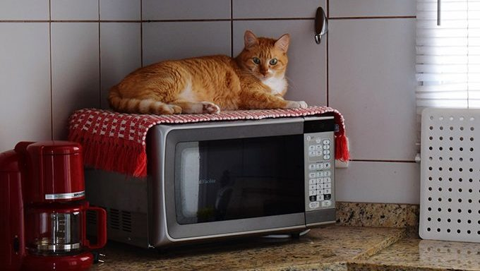 cat lying on toaster