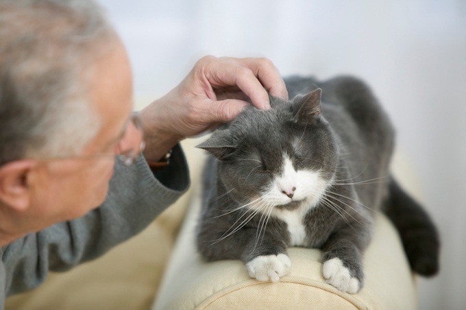 Why Do I Feel Anxious About Adopting A Senior Cat?